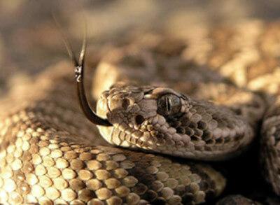 Dispelling Snakebite Myths